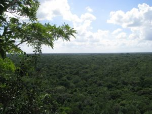 View from the top of the pyramid at Coba